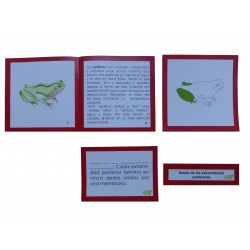 Nomenclatura anatomía externa anfibio