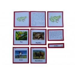 Nomenclaturas anatomía externa 5 vertebrados