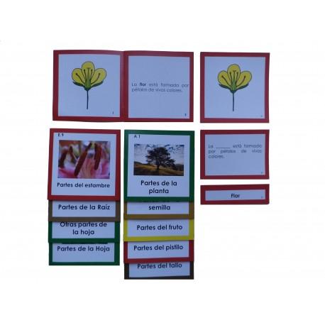 Nomenclaturas botánica 1