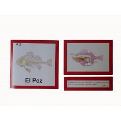 Nomenclatura pez anatomía interna