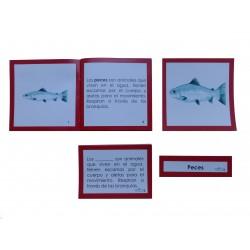 Nomenclatura anatomía externa pez